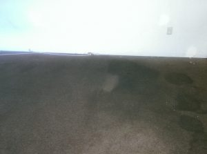 finished with carpet prespray and agitation